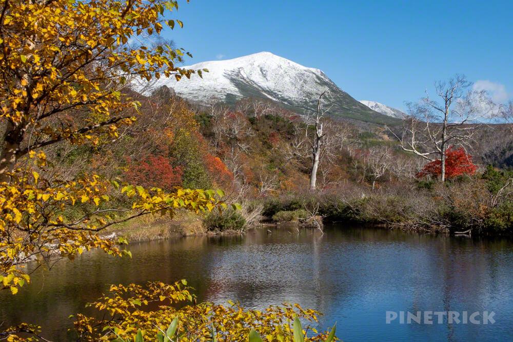 大雪高原温泉 沼めぐり 紅葉 ヒグマ情報センター 北海道 エゾ沼 緑岳