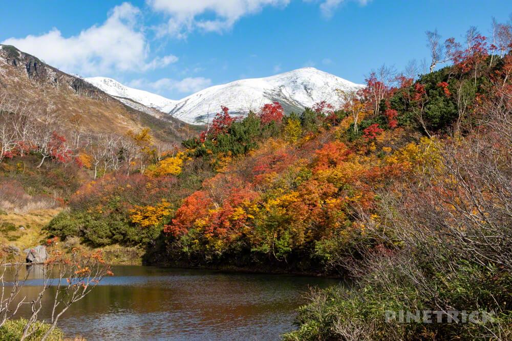 大雪高原温泉 沼めぐり 紅葉 ヒグマ情報センター 北海道 式部沼 緑岳