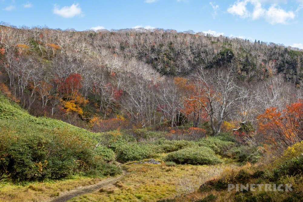 大雪高原温泉 沼めぐり 紅葉 ヒグマ情報センター 北海道