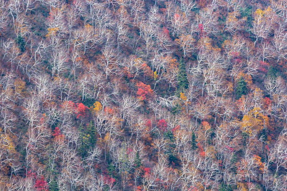 ニセイカウシュッペ山 ニセカウ 登山 北海道 紅葉