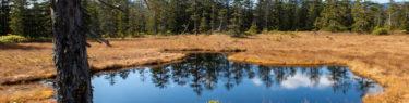 浮島湿原 北海道 沼 秘境
