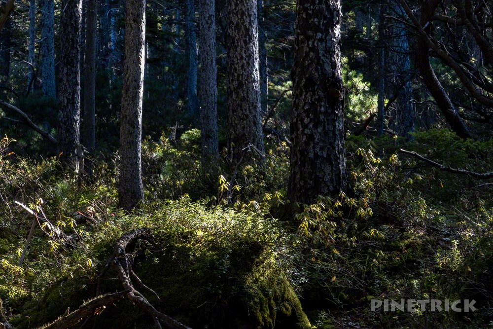 雌阿寒岳 山頂 剣ヶ峰 登山 北海道 苔の森