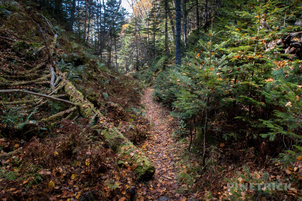 雌阿寒岳 山頂 剣ヶ峰 登山 北海道 森林コース登山口