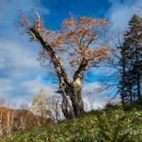 神居尻山 Bコース 駐車場 登山 北海道 道民の森 老木