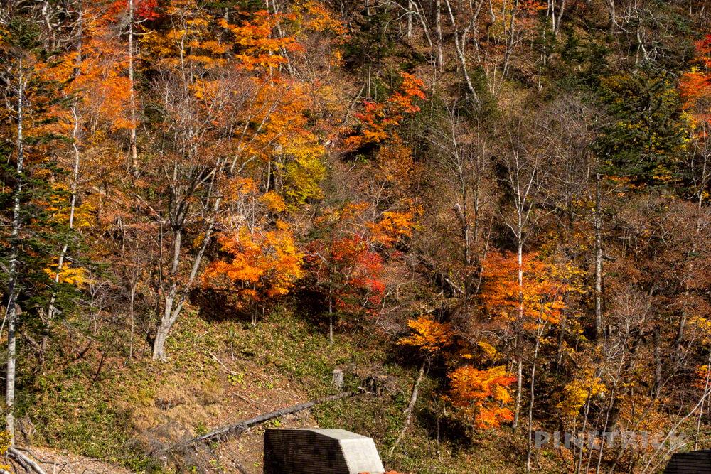 恵庭岳 登山 下山 北海道 紅葉