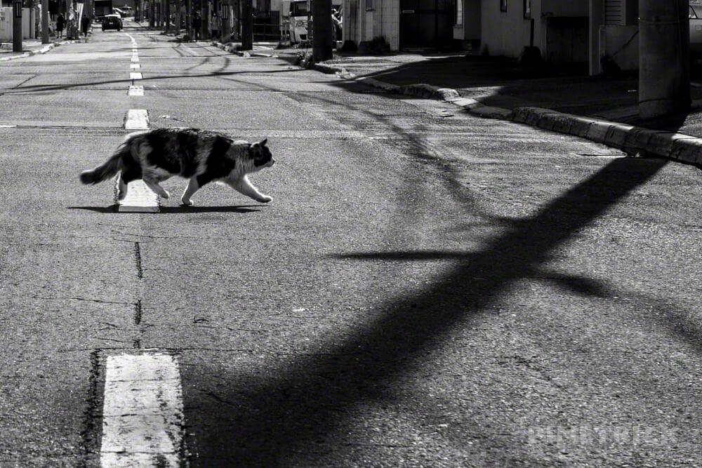 札幌市 街ブラ 野良猫 モノクロ