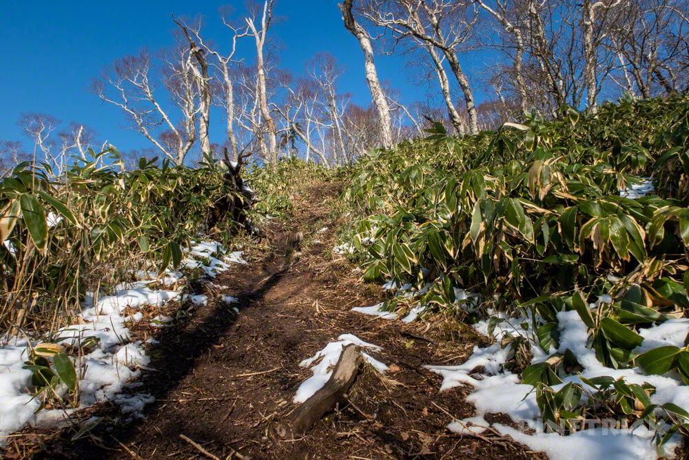 イチャンコッペ山 登山 北海道 785