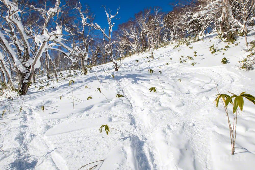 オコタンぺ山 登山 北海道 急登