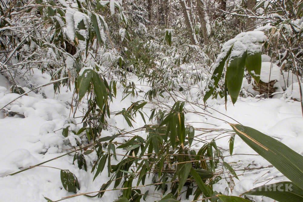 風不死岳 駐車場 冬山 北海道 登山