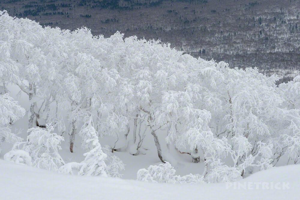 風不死岳 北尾根 冬山 北海道 登山 溶岩ドーム 樹氷