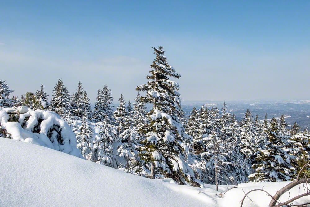 雌阿寒岳 登山 冬山 北海道 樹林帯