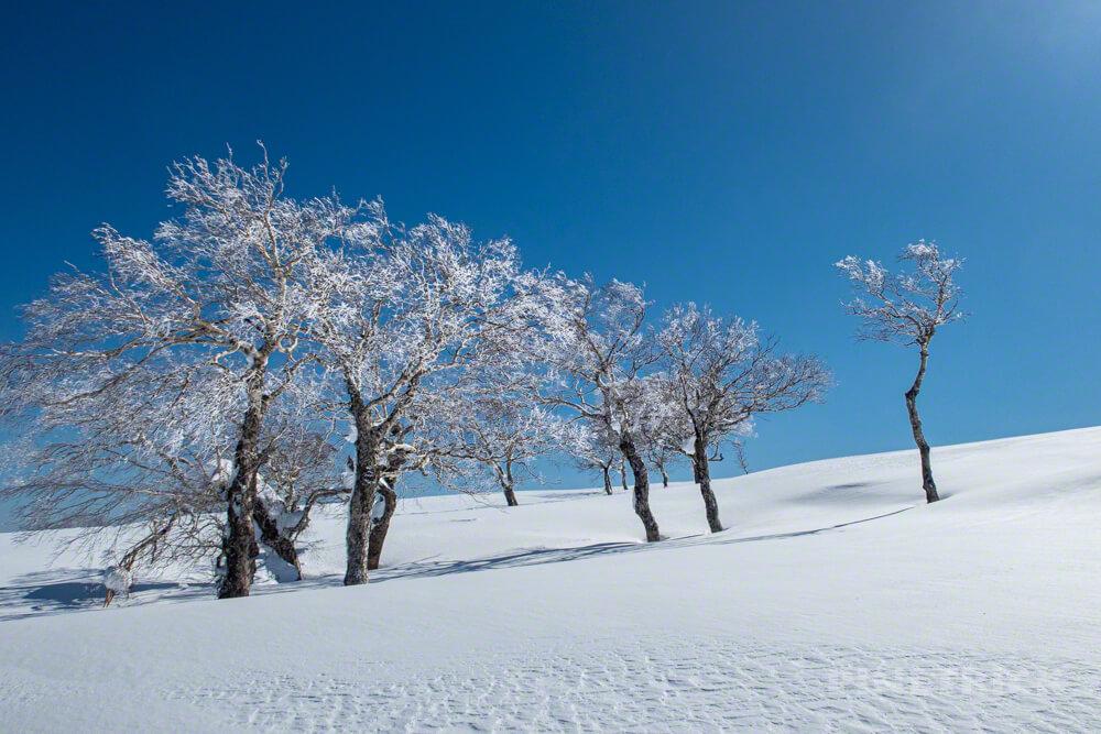 無意根山 豊羽元山コース 登山 北海道 定山渓 樹氷