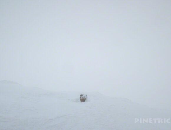 大雪山 旭岳 ロープウェイ 視界不良 登山 北海道 スノーシュー