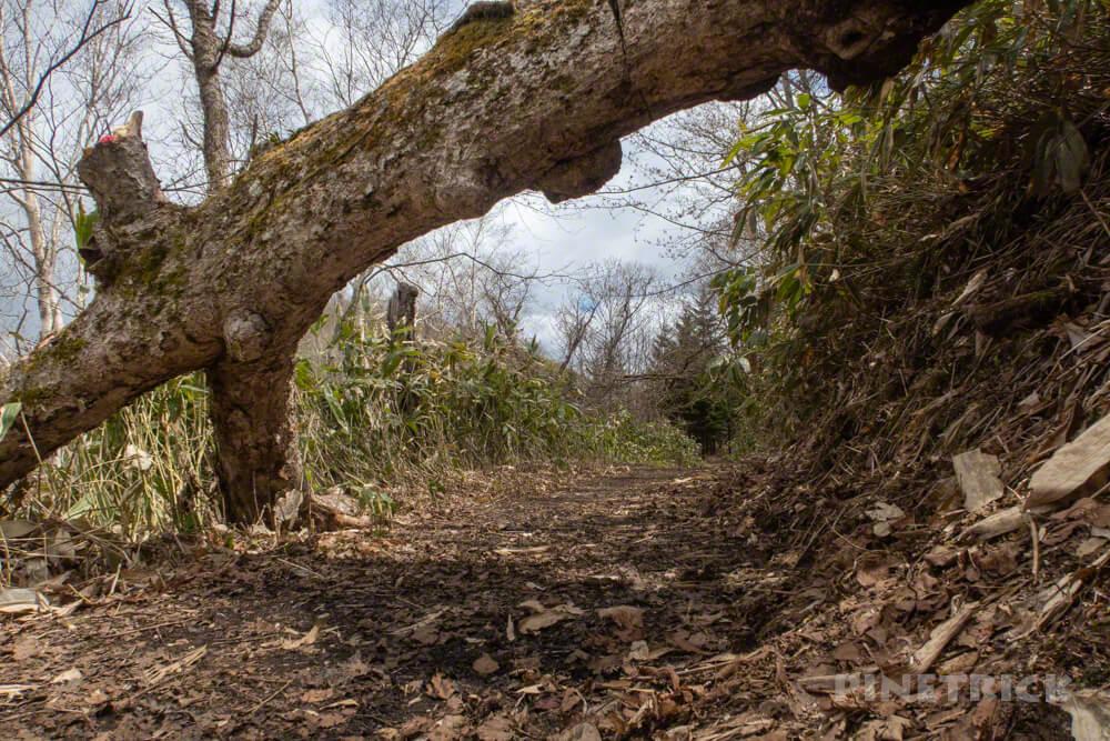 イチャンコッペ山 登山 北海道 倒木