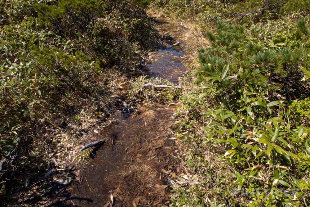 雷電山 山道 水たまり 泥濘