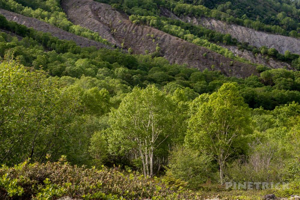 樽前山 北海道 登山 新緑