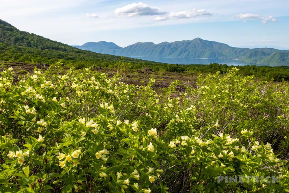 樽前山 登山 北海道 お花畑コース ウコンウツギ