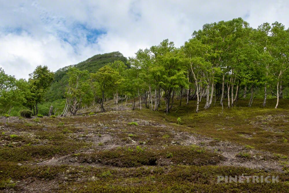 苔の回廊 楓沢 北海道 夏道