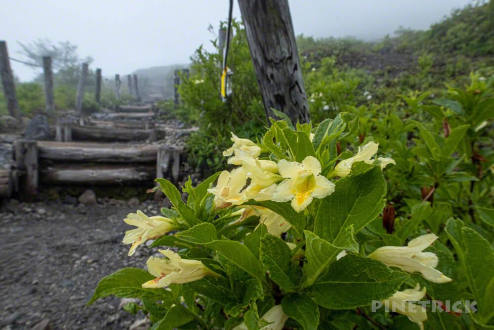 樽前山 登山 北海道 ウコンウツギ