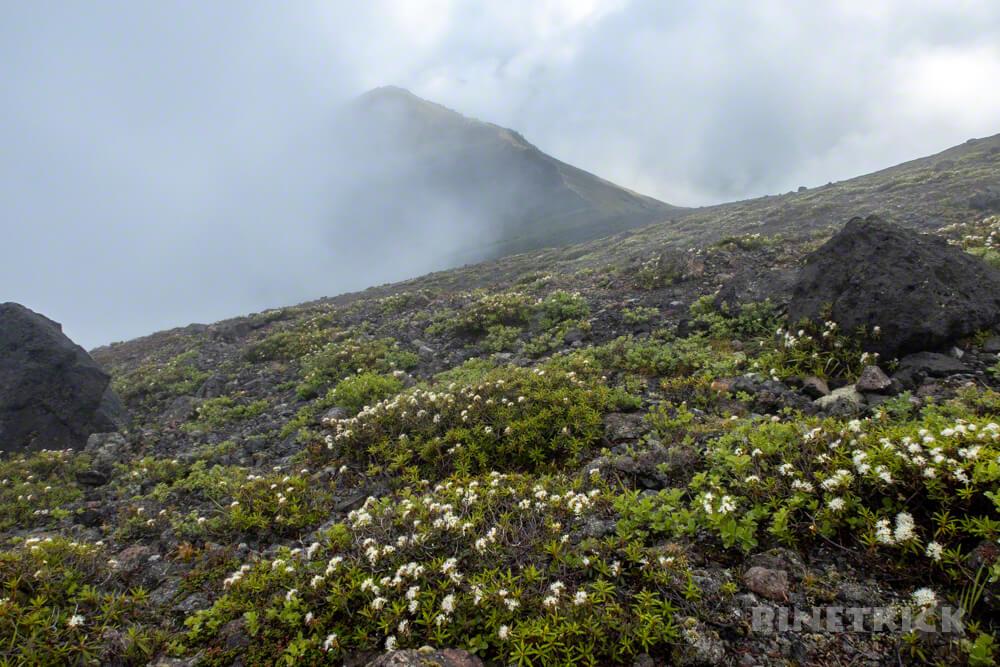 樽前山 登山 北海道 エゾイソツツジ 932峰