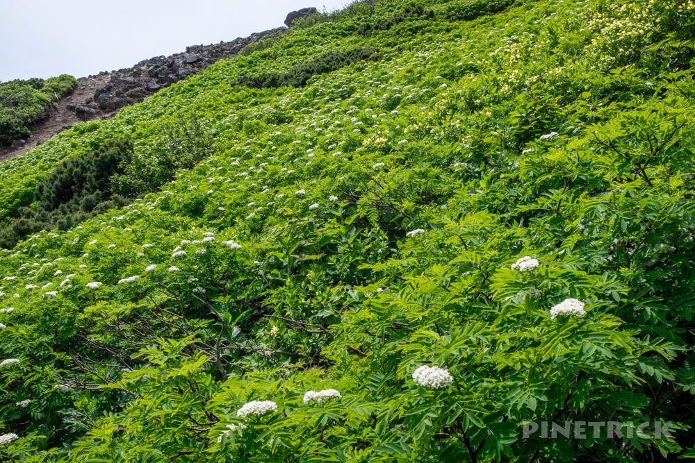 羊蹄山 京極コース 登山 北海道 ナナカマド