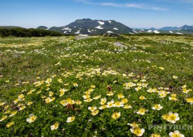 登山 北海道 テント泊 トムラウシ山 チングルマ 天人峡コース ヒサゴ沼
