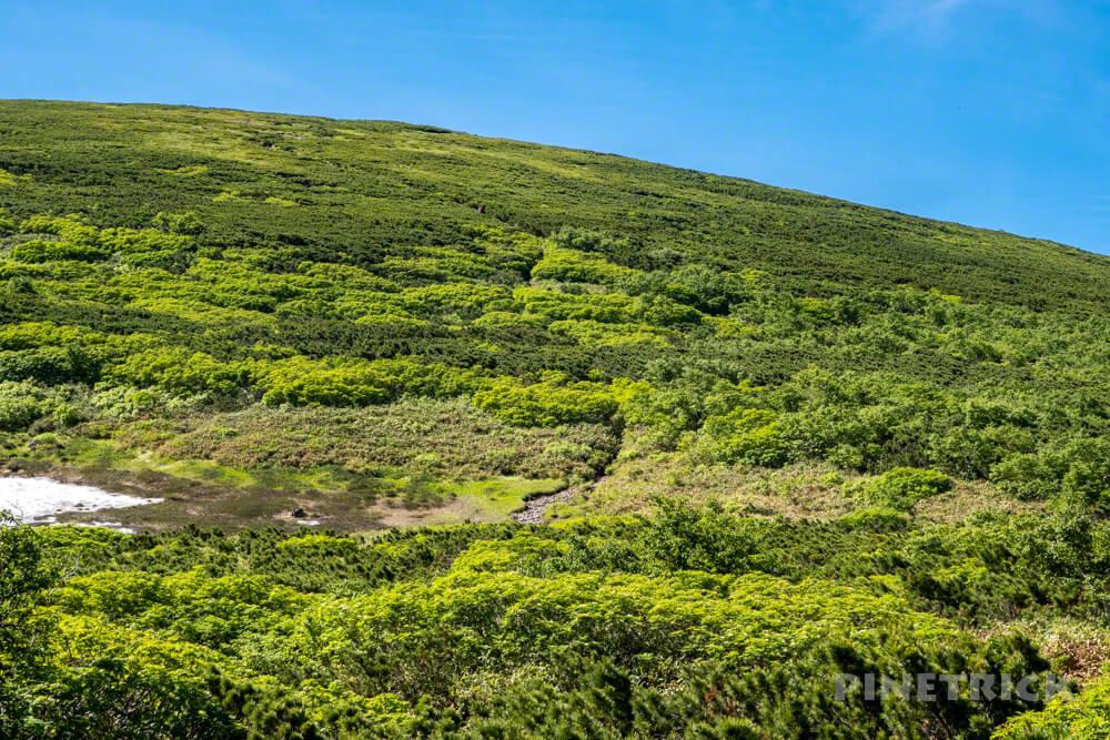 登山 北海道 天人峡コース ハイマツ テント泊