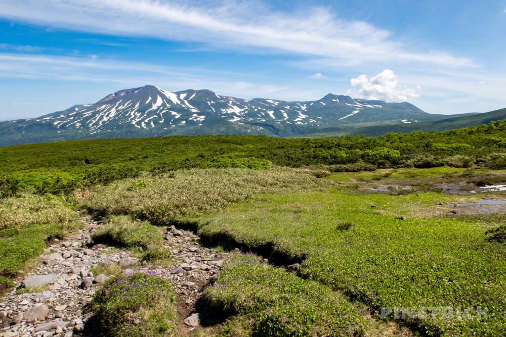 登山 北海道 天人峡コース ハイマツ テント泊 旭岳