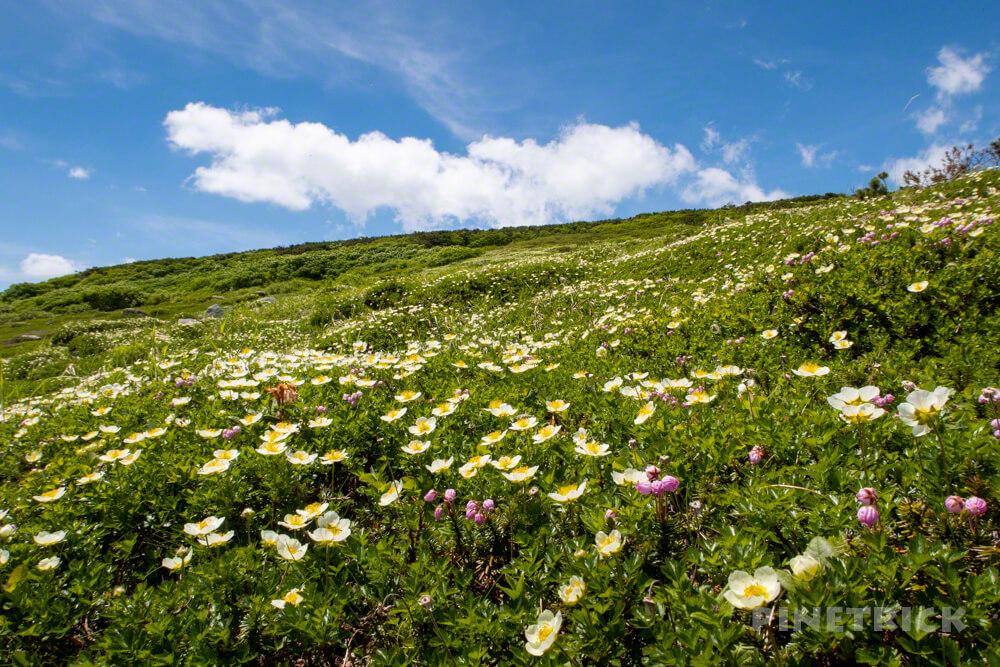 登山 北海道 天人峡コース ヒサゴ沼 チングルマ メルヘン