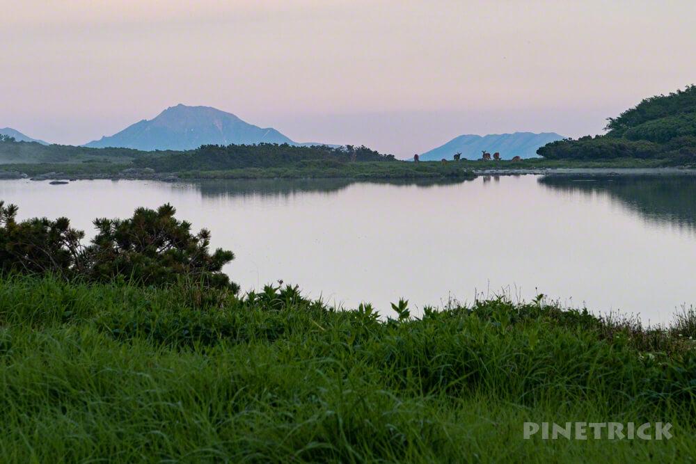 ヒサゴ沼 ニペソツ エゾシカ テント泊 登山 北海道