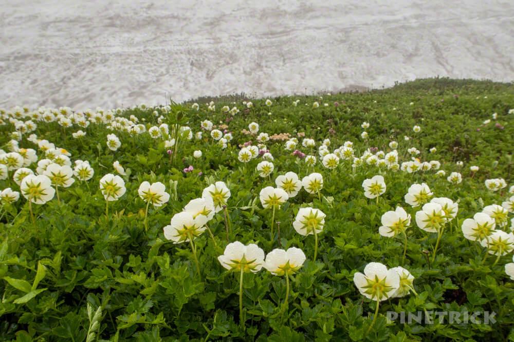 登山 北海道 ヒサゴ沼 木道 ガス 雪渓 チングルマ