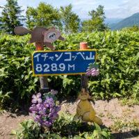 イチャンコッペ山 登山 北海道 山頂