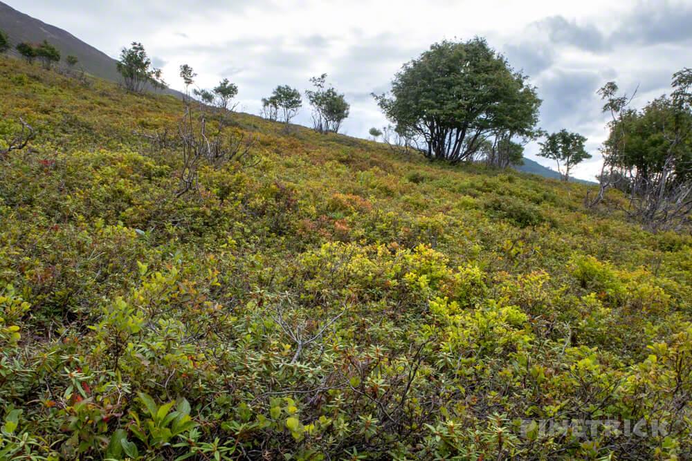 樽前山 お花畑コース 登山 北海道