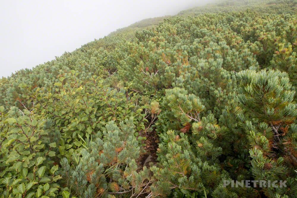 羊蹄山 倶知安コース ヒラフコース 登山 北海道