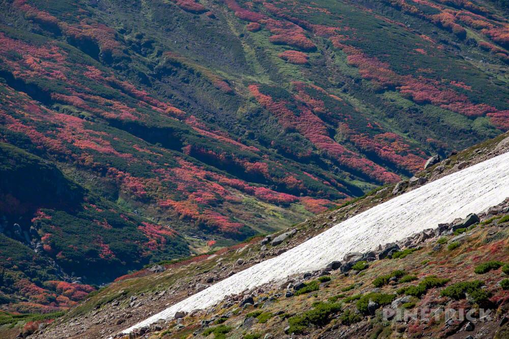 大雪山 紅葉 登山 雪渓 北海道