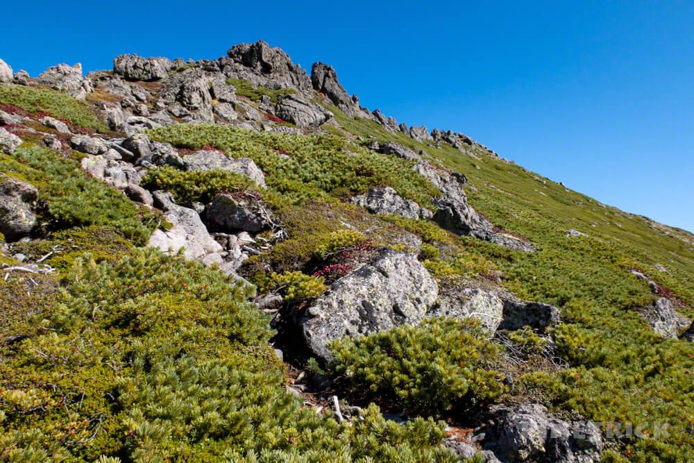 鋸岳 登山 北海道 ハイマツ帯