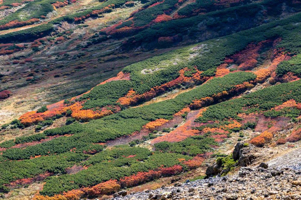 大雪山 お鉢周り 紅葉 登山 北海道