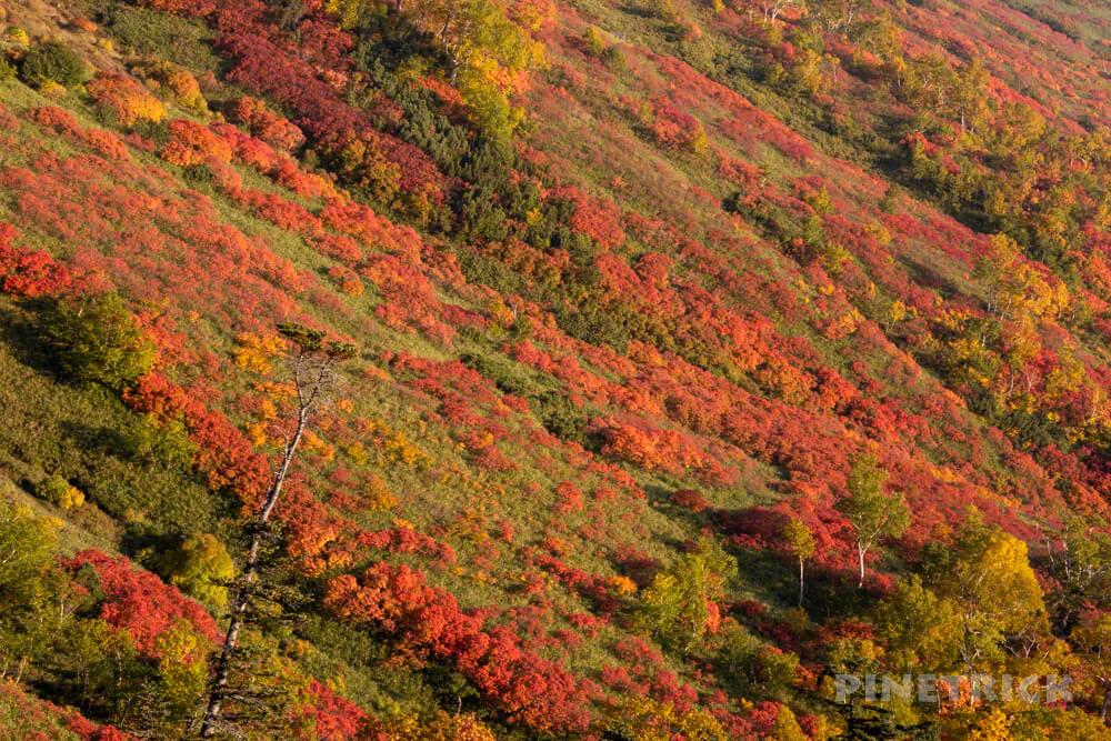 銀泉台 赤岳 白雲岳 登山 北海道 紅葉