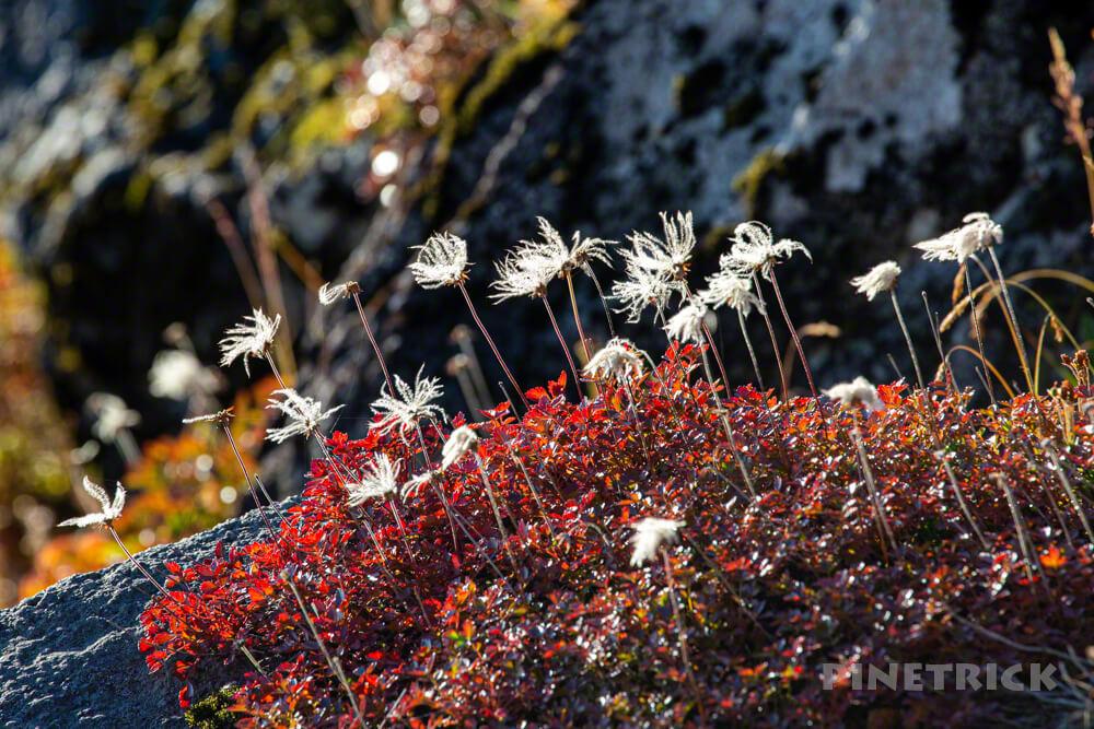 銀泉台 白雲岳 赤岳 登山 北海道 第二花園 チングルマ