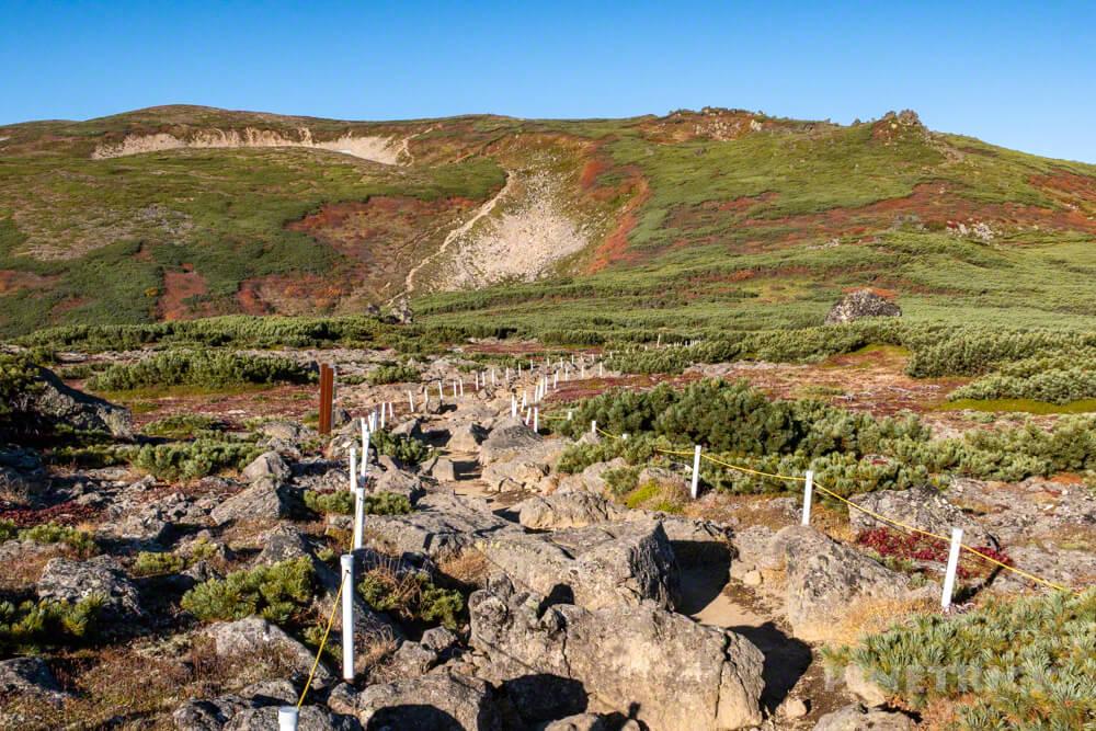 銀泉台 白雲岳 赤岳 登山 北海道 コマクサ平