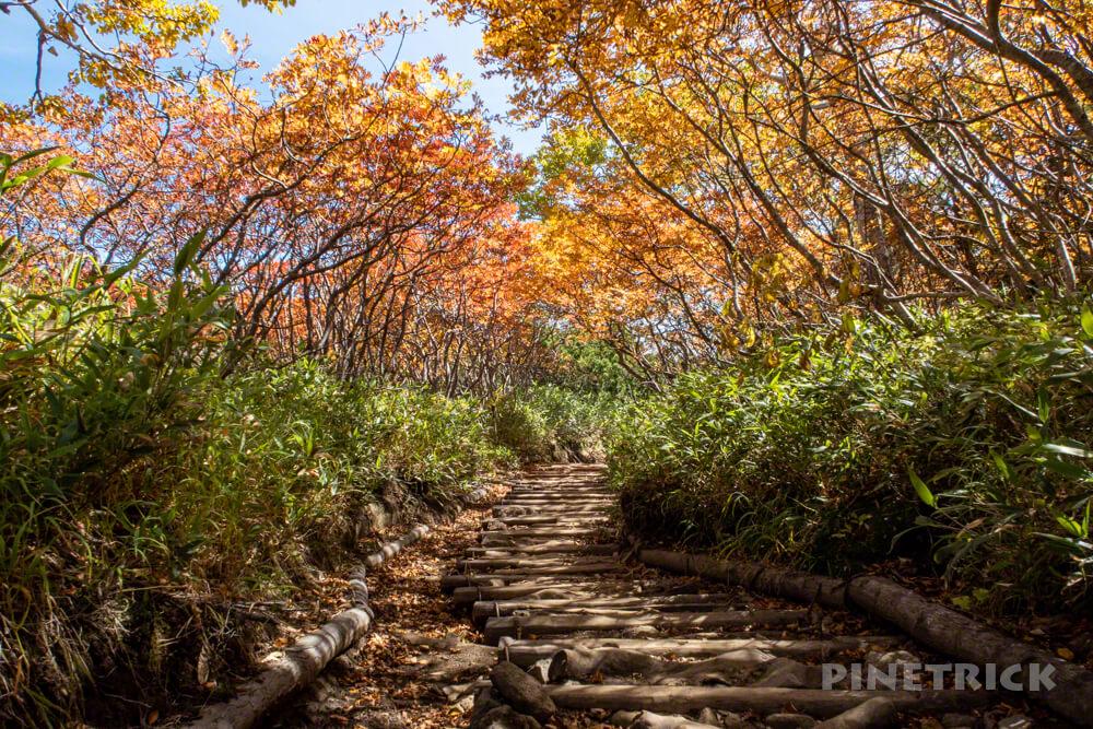 銀泉台 赤岳 登山 北海道 紅葉