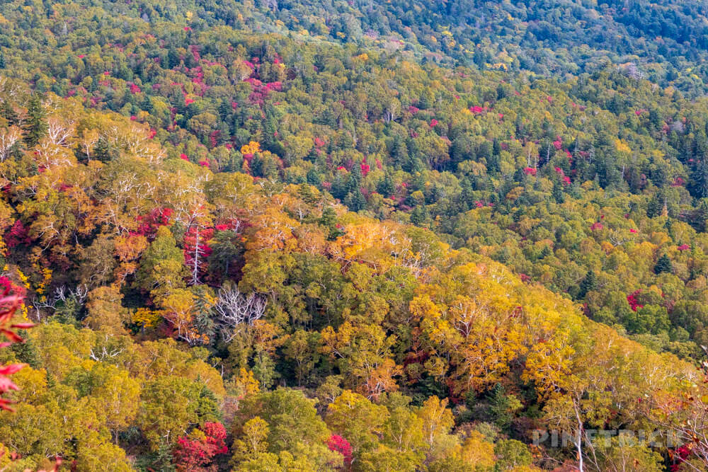 空沼岳 登山 北海道 山頂 紅葉
