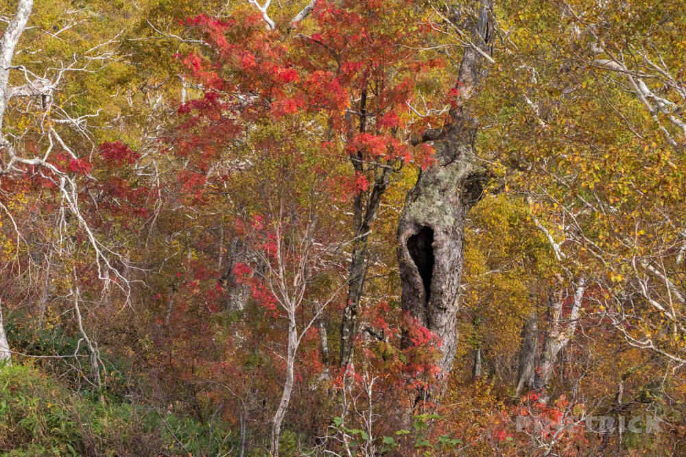 空沼岳 登山 北海道 紅葉