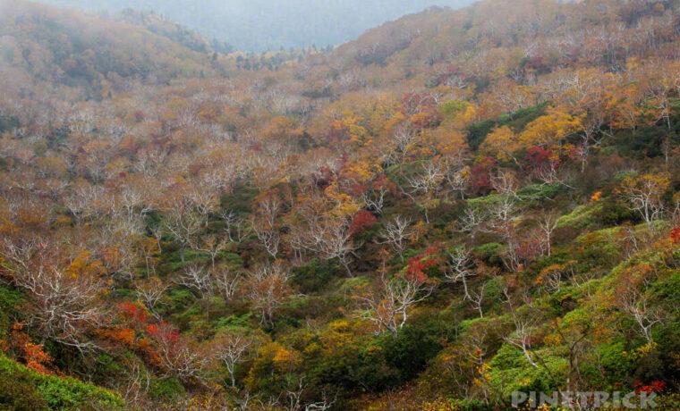 夕張岳 登山 北海道 紅葉
