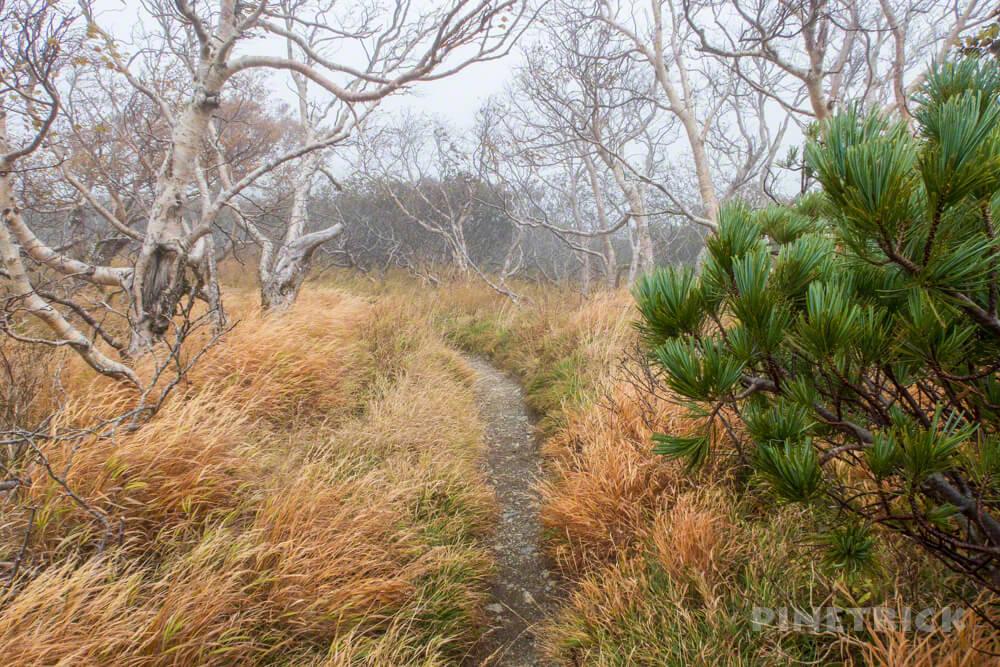 夕張岳 登山 北海道