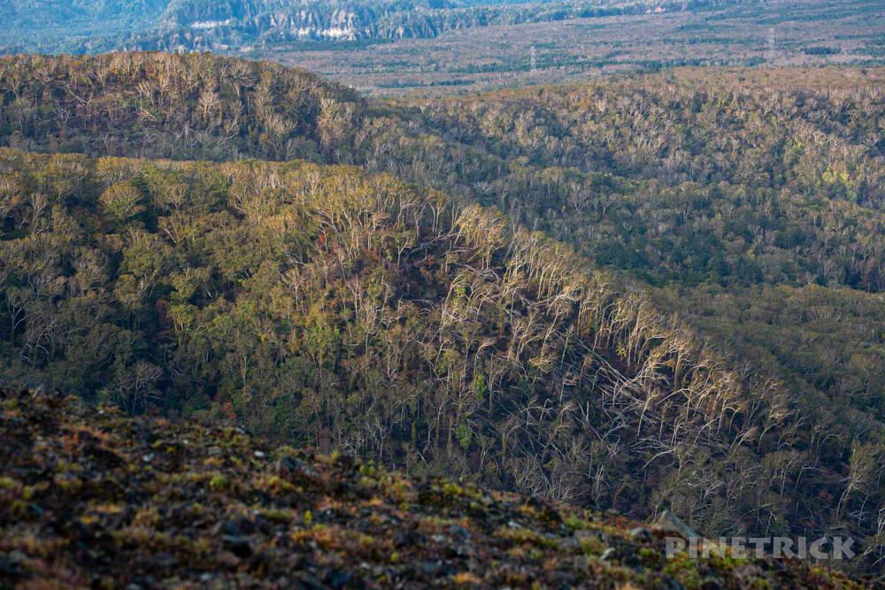 樽前山 登山 北海道 西山 倒木