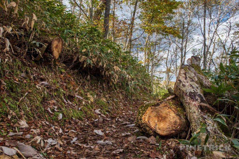 イチャンコッペ山 登山 北海道 4合目 倒木