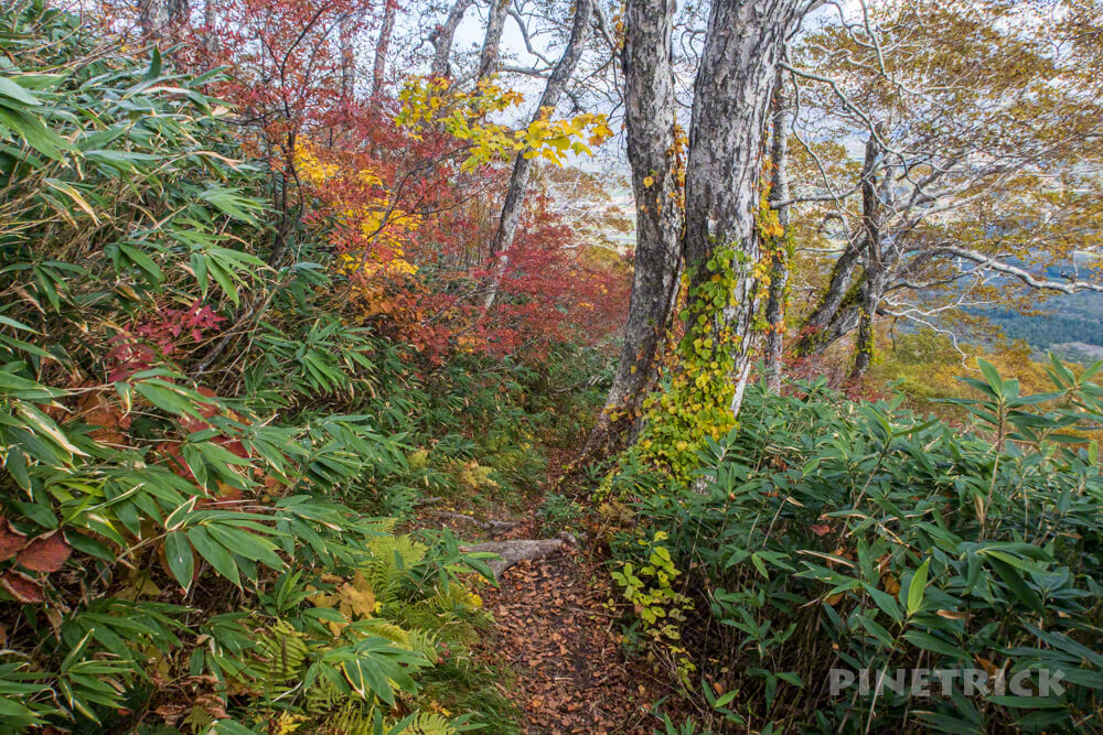 羊蹄山 喜茂別コース 登山 北海道 紅葉